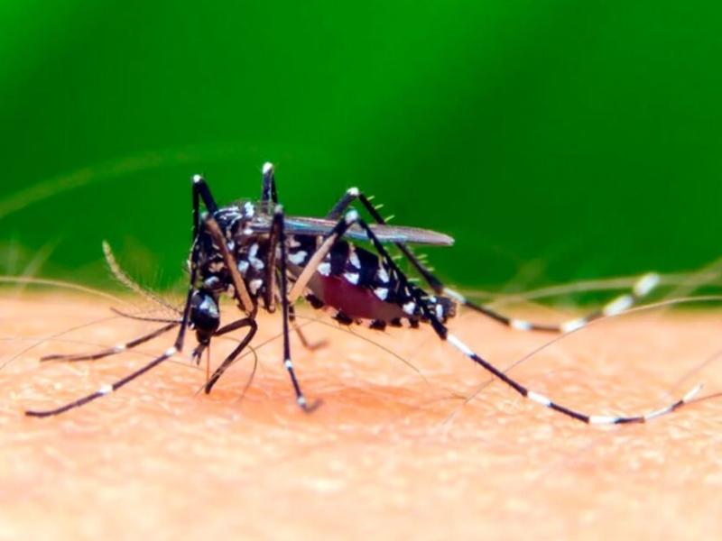 mosquitos playa del carmen