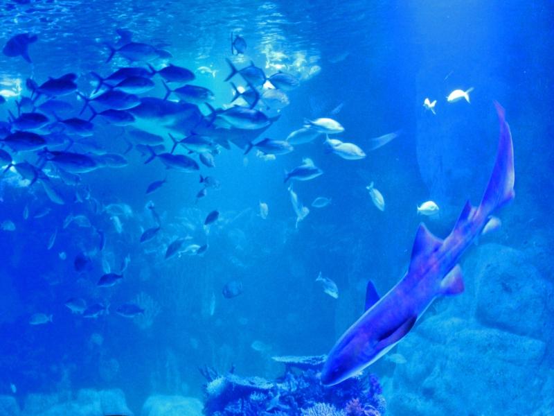 acuario playa del carmen