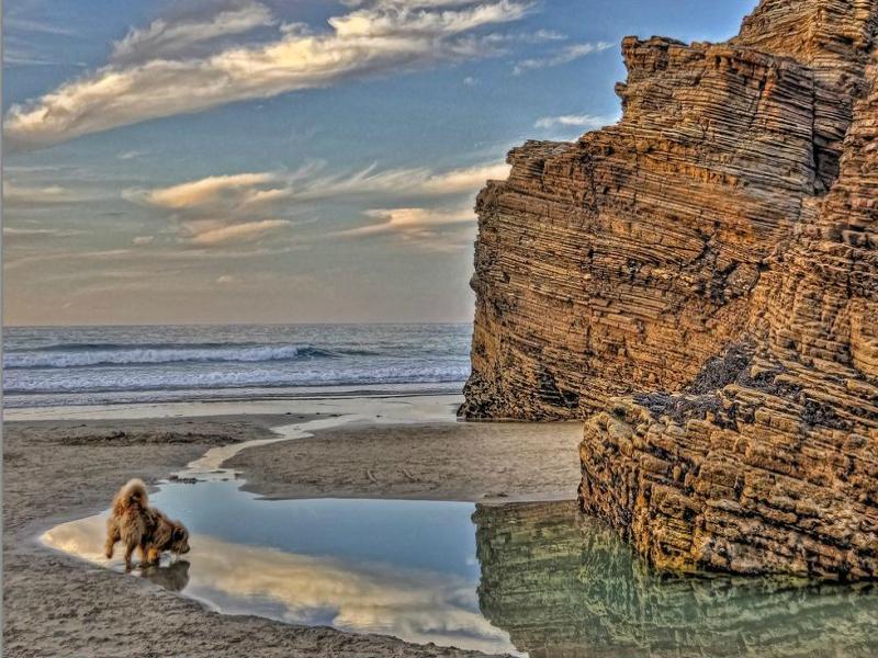 visita a la playa de las catedrales con perro
