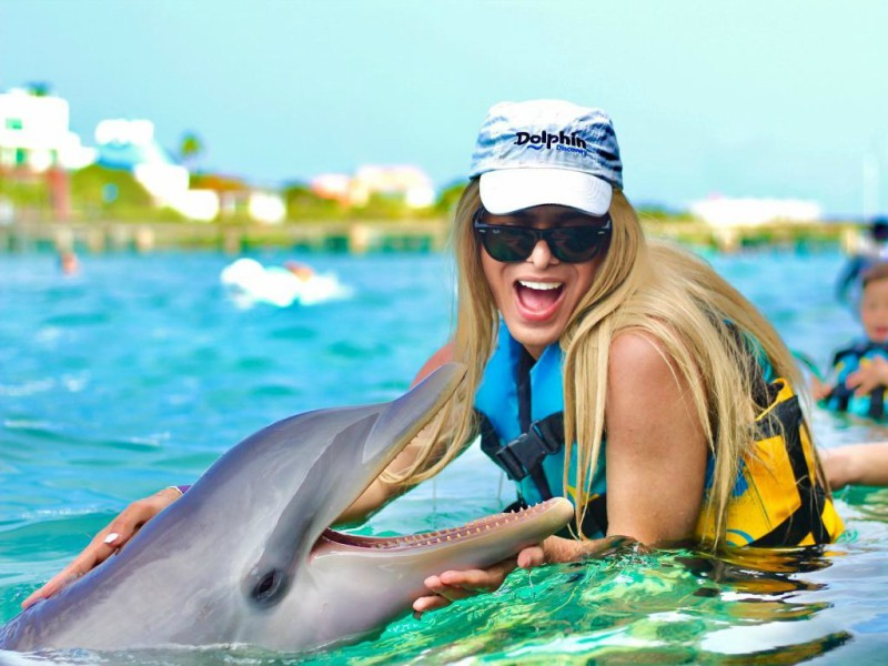nado con delfines playa del carmen dolphin discovery