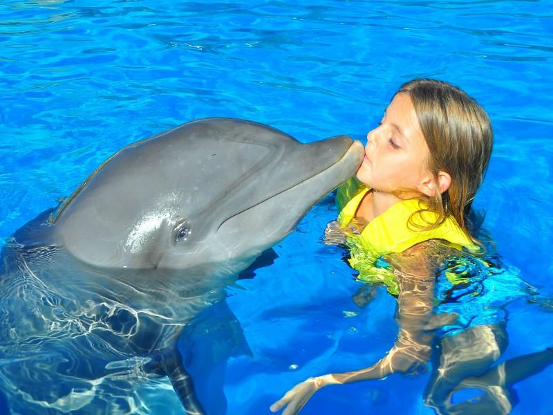 nado con delfines playa del carmen dolphinaris