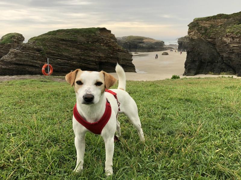 qué ver cerca de la Playa de las Catedrales paseo con perros