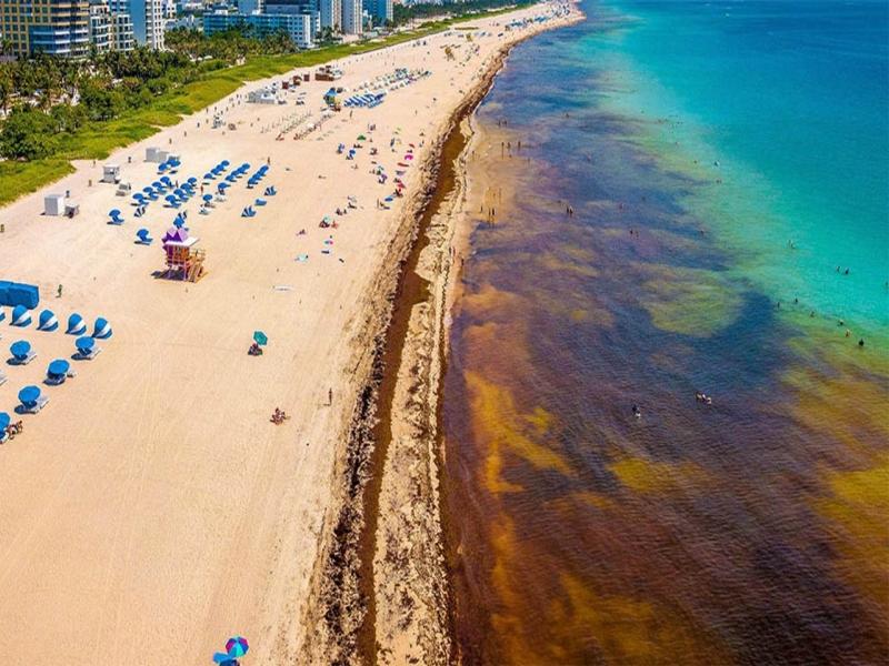Sargazo Playa del Carmen cómo afecta