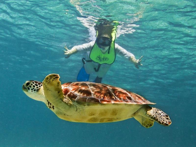 scuba diving playa del carmen snorkel tortugas