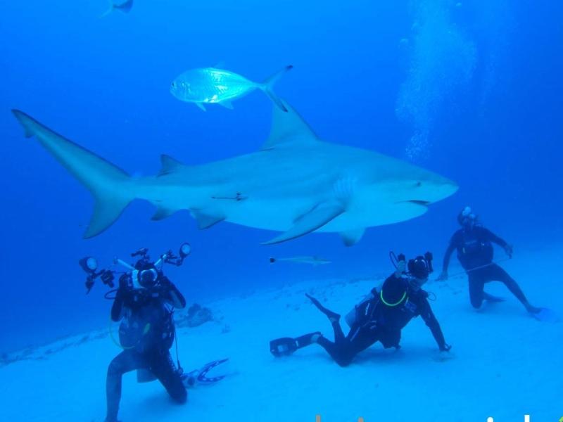 scuba diving playa del carmen tiburon toro